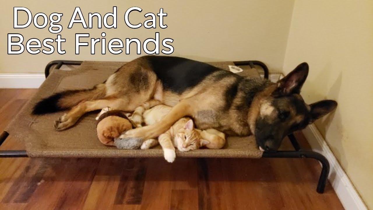 子猫を保護してきたときの先住犬の反応が面白い
