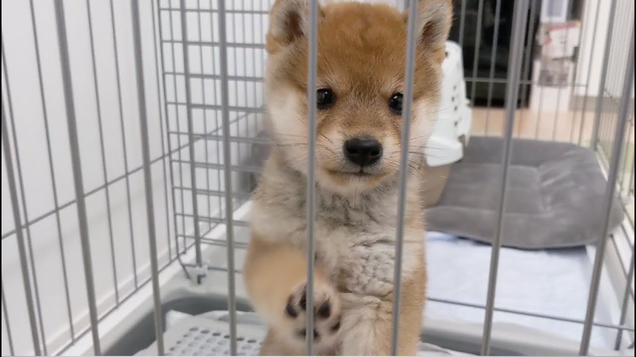 名前を呼ぶと来る赤ちゃん犬