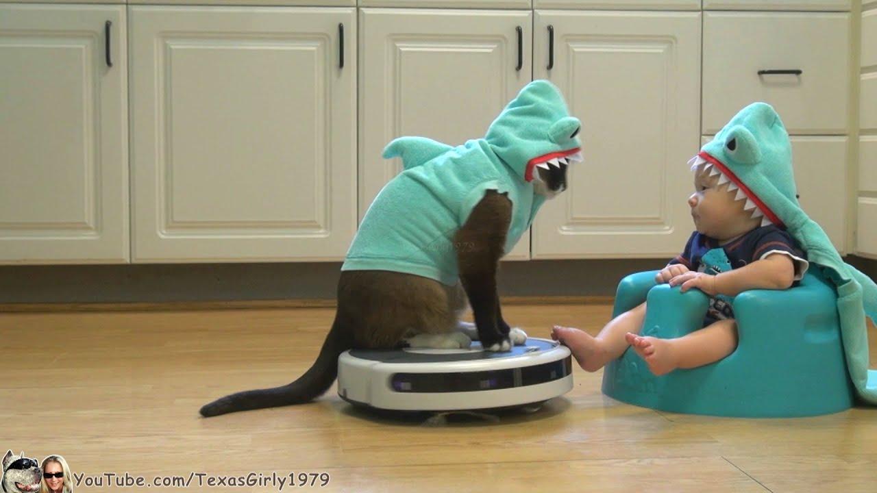 被りものをしてルンバで遊ぶ猫