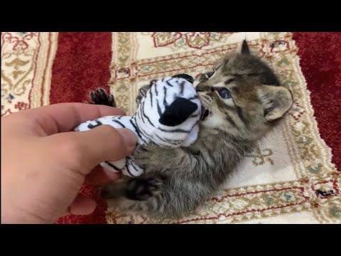 保護された子猫のかわいさがたまらない