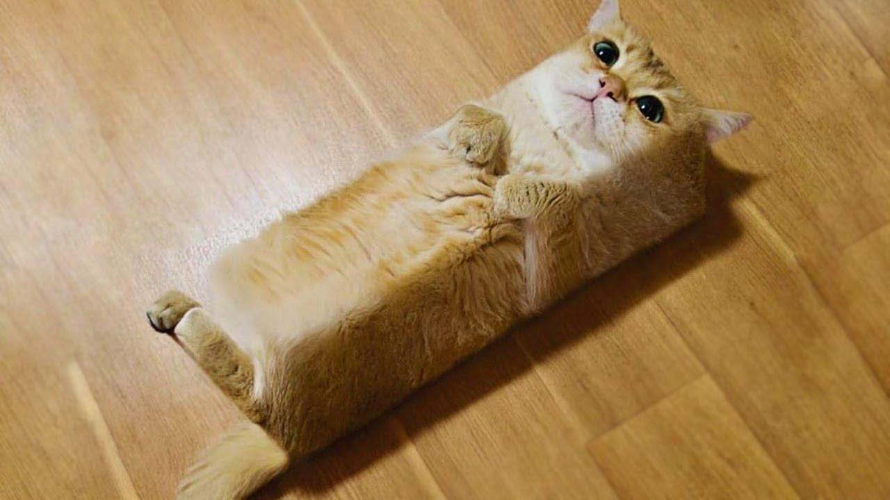 猫の可愛い仕草をまとめてみました