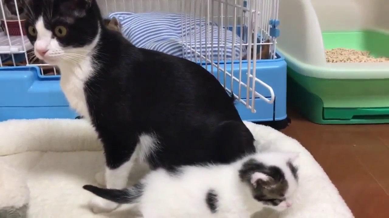 かわいい!心配性のお母さん猫