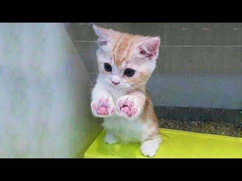 癒ししかない!可愛い子猫のオンパレード