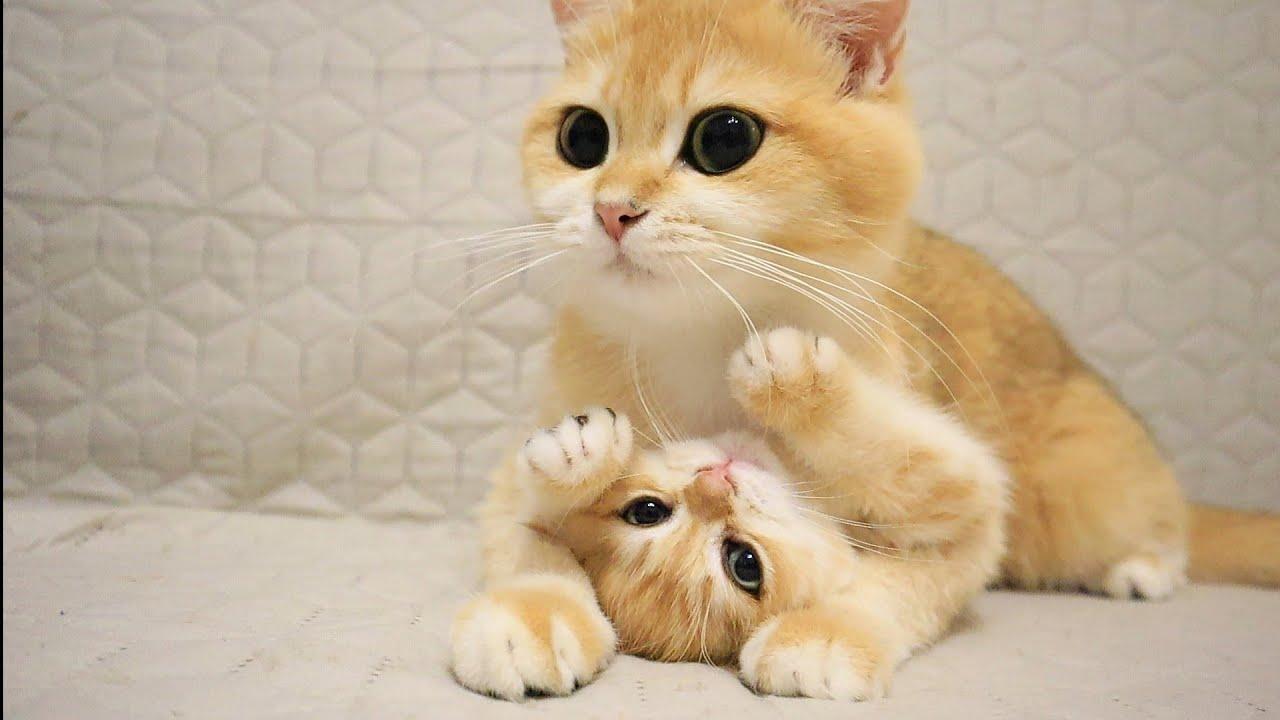 激しい母猫の愛に必死で抵抗する子猫