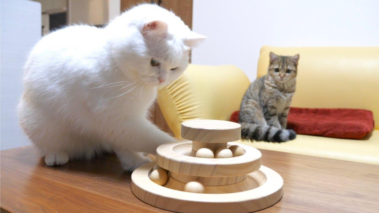 先輩猫の熟練の手つきについていけない子猫